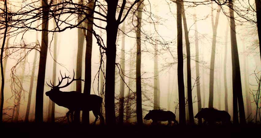 Carnes de caza Solobuey1