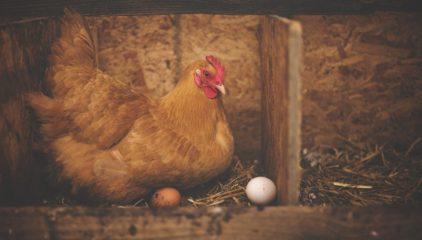 Arrancamos con huevos el 2021