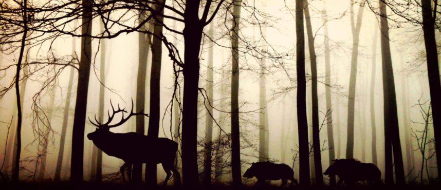 Cortes de caza